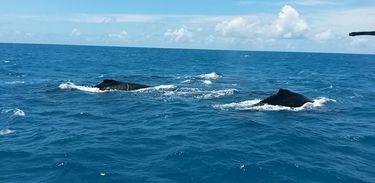 baleias_01.jpg