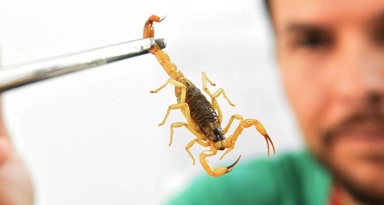 O ministério não recomenda o uso de produtos químicos como pesticidas para o controle de escorpiões