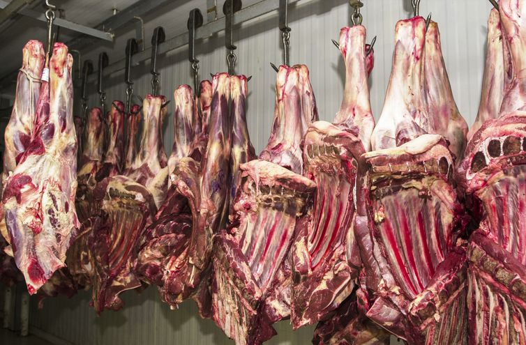 Carne fresca,Açougues, Frigoríficos, alimento