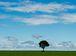 Árvore em meio à plantação de soja (Marcelo Camargo/Agência Brasil)