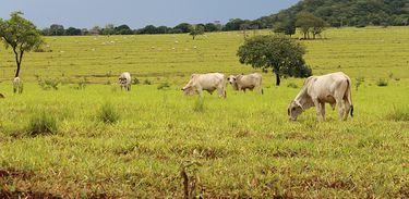 Pesquisa mostra que a remuneração no agronegócio cresce mais que os demais setores