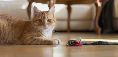 animais domésticos em condomínios
