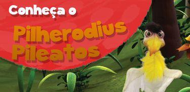 Pilherodius Pileatos