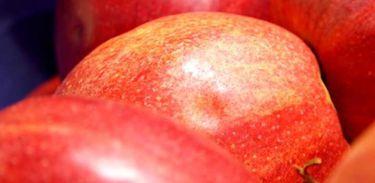 Futurando mostra o tipo de alimentação que deixa o organismo mais preparado para prevenir doenças