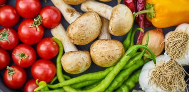 O Futuro da alimentação em destaque no Sem Censura