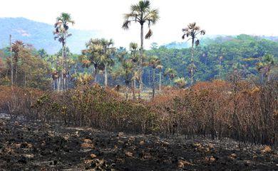 Brigadistas e voluntários trabalham 24 horas por dia para combater o incêndio no Parque Nacional da Chapada dos Veadeiros