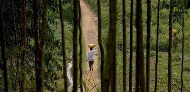 A Biodiversidade beneficia a natureza e a sociedade