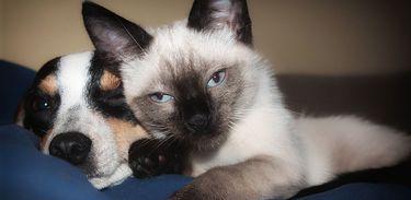 Proteja seus animais de acidentes domésticos