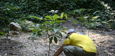 Floresta da Tijuca ganha mudas de espécies nativas da Mata Atlântica