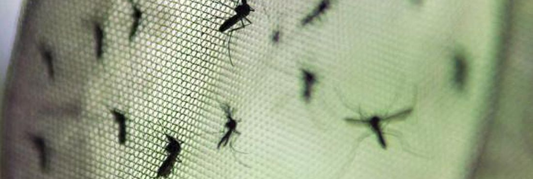 Nos dois primeiros meses deste ano, foram notificados 87.136 casos de dengue no país
