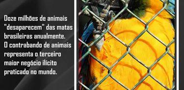 Tráfico de animais
