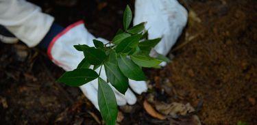 Close em mãos de pessoa que planta muda de árvore