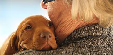 Cachorro e idoso
