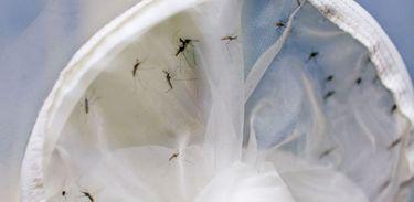O relatório destaca a necessidade de controlar o mosquito Aedes aegypti de forma integrada e multissetorial, considerando que o  mesmo espalha várias doenças