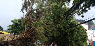 Chuvas provocam quedas de árvore e tapumes na Barra da Tijuca