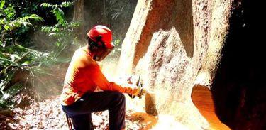 Manejo florestal na Amazônia é tema do Futurando