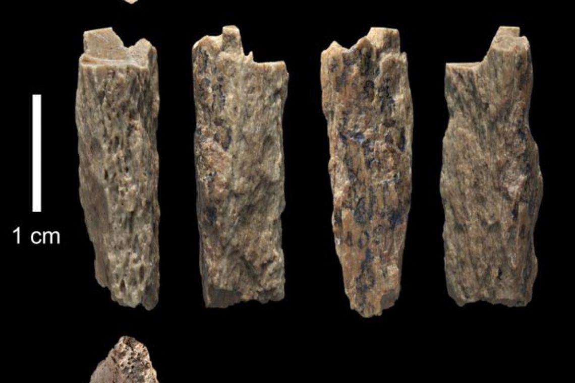 """Ossos do espécime """"Denisova 11"""", fruto da união entre uma mãe de sub-espécie Neanderthal e pai de sub-espécie Denisoviana"""