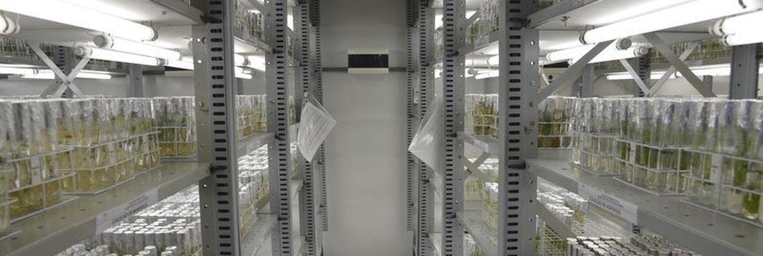 Embrapa inaugura novas instalações do Banco de Germoplasma. Os germoplasmas são qualquer estrutura de um organismo vivo que possa dar origem a exemplares da mesma espécie, como sementes
