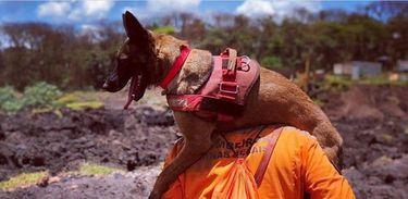 Cães contribuem com as buscas em Brumadinho