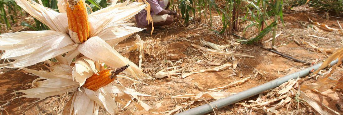 Alta foi provocada pela quebra de safra nas principais regiões produtoras do grão, que sofreram com a seca este ano