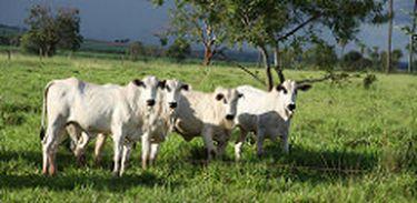 O Rally da Pecuária é a maior expedição técnica focada na bovinocultura