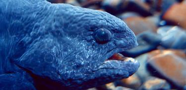 Conheça criaturas pouco atraentes, mas bastante habilidosas