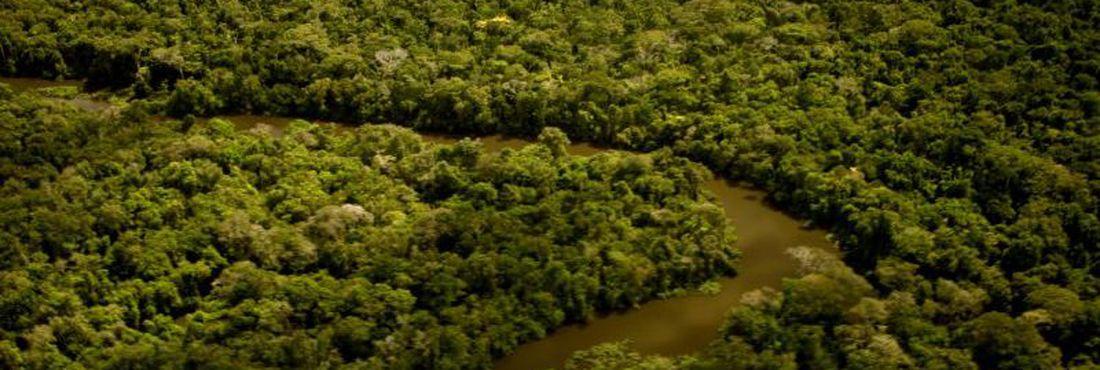 IBGE reconhece novo tipo de vegetação em Mato Grosso