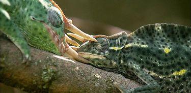 """Série """"Histórias de Vida"""" acompanha hábitos de diversas espécies em seu habitat"""