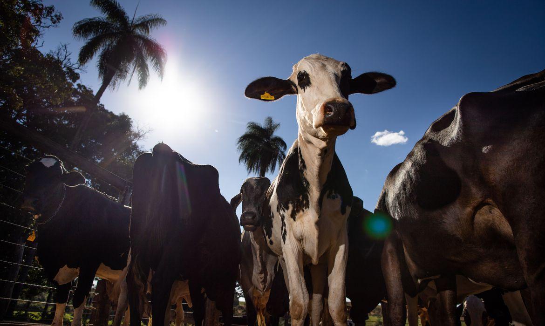 Pecuária leiteira, Gado de leite, Ordenha, Armazenamento de leite
