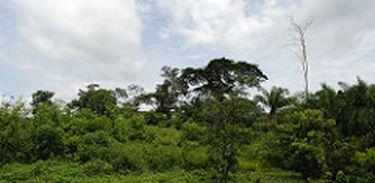 Inventário Nacional, estudo que mostra como está a conservação florestal em todo território Brasileiro