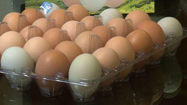 Granja que produz ovos caipiras naturalmente coloridos
