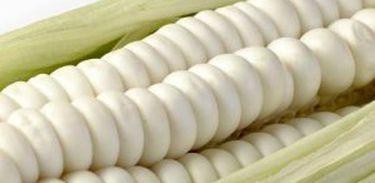 Cultivar de milho Branco é alternativa para panificação sem Glutén