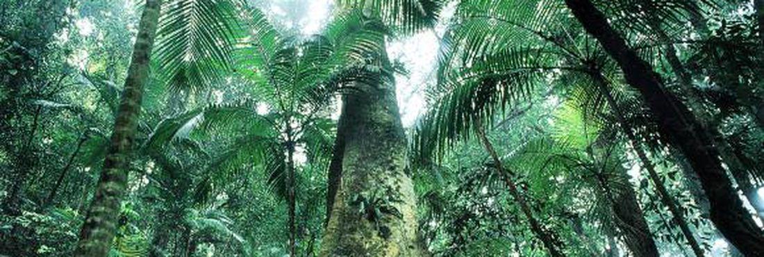 Objetivo do inventário é evitar desaparecimento de espécies e preservar biodiversidade