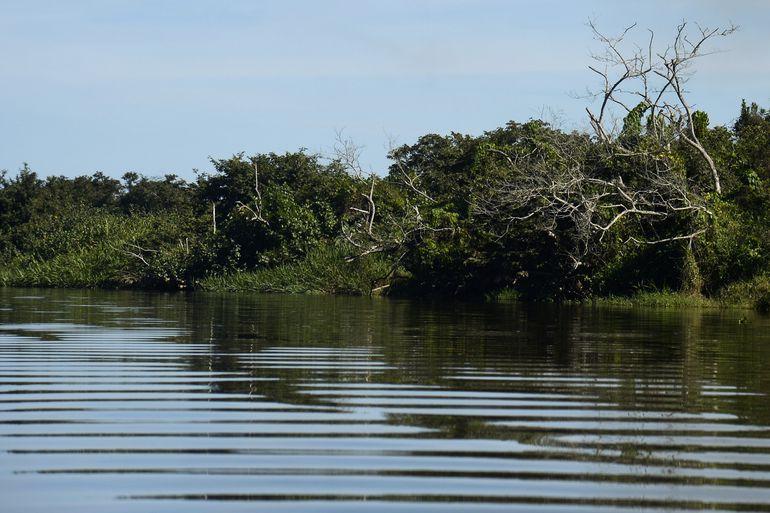 Rio de Janeiro - Manguezais da Área de Proteção Ambianetal(APA) de Guapi-Mirim e Estação Ecológica da Guanabara