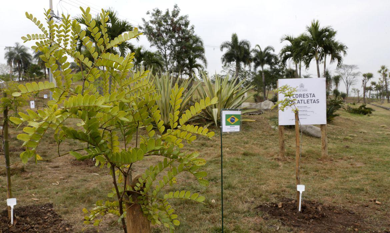 Rio dá início a plantio de mudas na Floresta dos Atletas promessa da Rio 2016