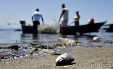 Rio de Janeiro - Mesmo poluída, Baía de Guanabara é fonte de renda para milhares de pescadores (Tânia Rêgo/Agência Brasil)