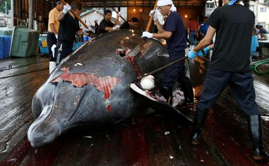 FILE PHOTO: Workers butcher a Baird's Beaked whale at Wada port in Minamiboso, southeast of Tokyo, June 28, 2008. REUTERS/Toru Hanai/File Photo