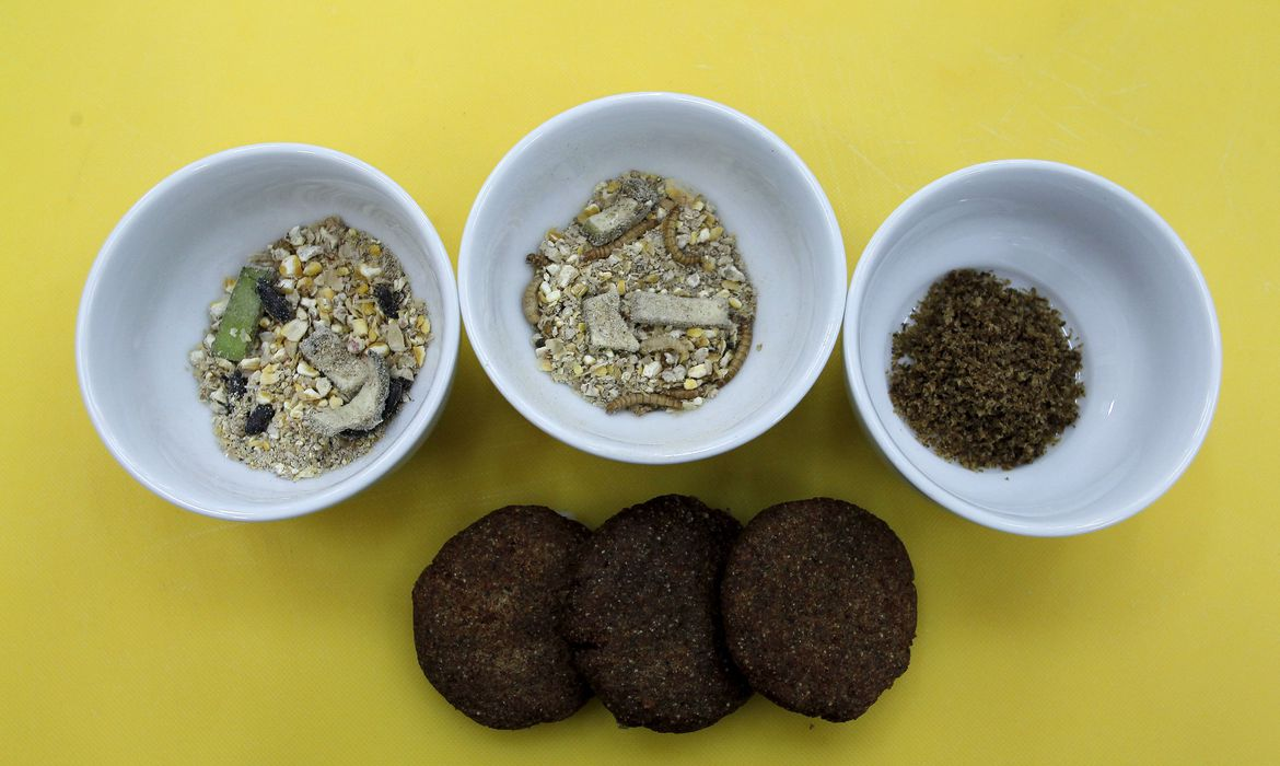 Mealworm, larva, dry mixture, and patties are displayed at University of Costa Rica in San Jose