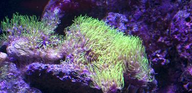 Conhecendo Museus visita o Museu Oceanográfico que preserva a biodiversidade marinha