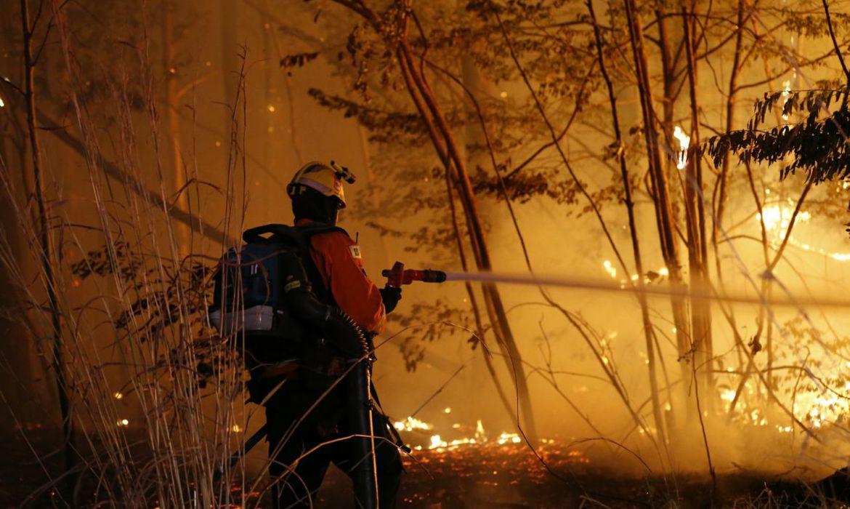O Corpo de Bombeiros combate um incêndio na Floresta Nacional de Brasília