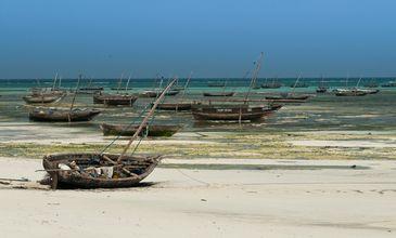 Episódio de estreia de Ilhas Selvagens visita o arquipélago de Zanzibar