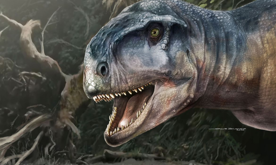 An artist's impression of the Cretaceous Period meat-eating dinosaur Llukalkan aliocranianus that lived about 80 million years ago in the Patagonia region