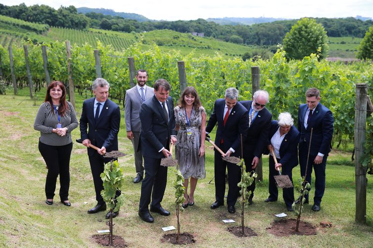 Argentina's President Mauricio Macri, Brazil's President Jair Bolsonaro, Paraguay's President Mario Abdo Benitez and Uruguay's Vice President Lucia Topolansky take part in a Vineyard Planting Ceremony during a Mercosur trade bloc summit, in