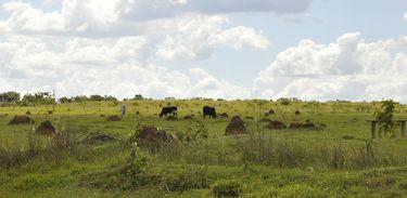 Mapeamento de áreas degradadas no bioma Cerrado