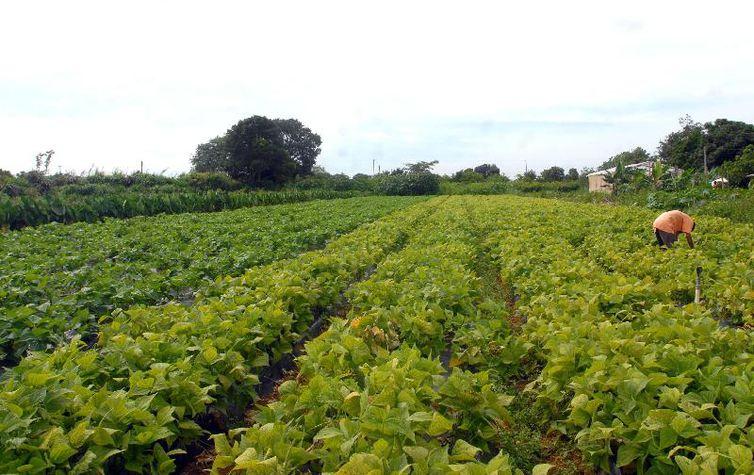 lavoura_agricultura_familiar.jpg