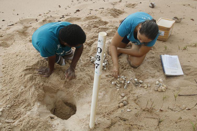 Seu Antônio, tartarugueiro, e a bióloga Denise Mora, do Projeto Tamar, monitoram ninho de tartarugas recém nascidas.