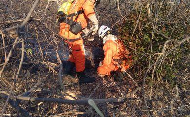 Bombeiros atuam em quatro regiões atingidas por incêndios florestais