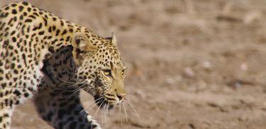 """A selvagem Mashatu, na África, é chamada de """"Terra dos Gigantes"""""""