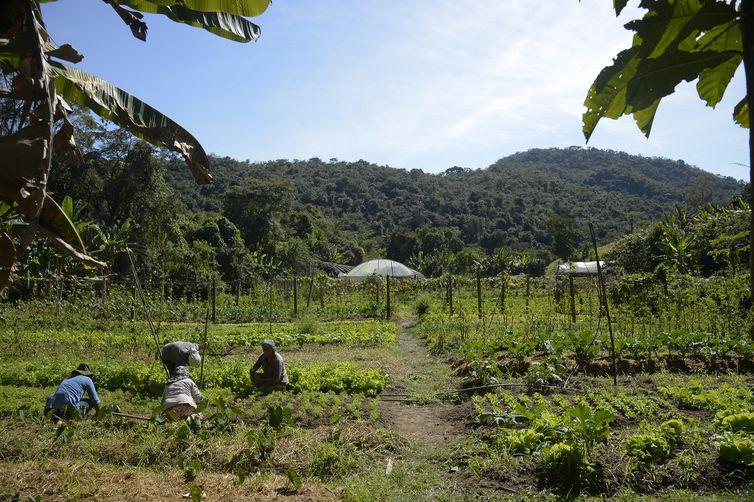 Horta na propriedade de Waldir Pollack em Paracatu de Baixo, distrito de Mariana, no local são cultivadas cerca de 40 variedades de hortaliças e legumes.