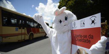 Campanha luta contra testes de cosméticos em animais